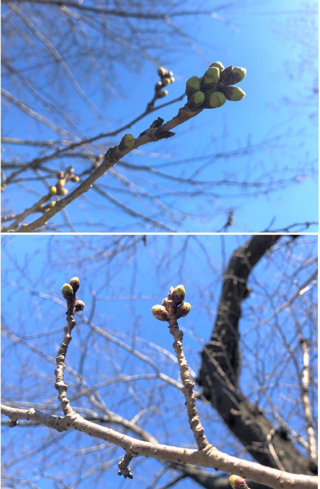 春めいてきました